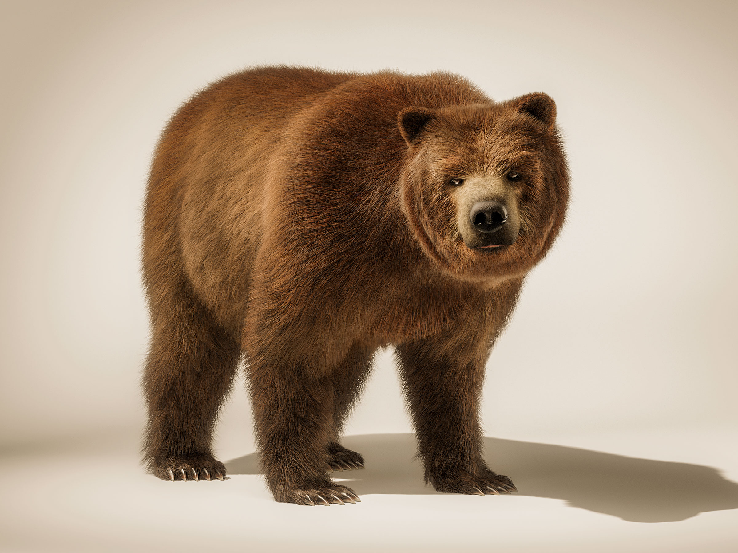 brown_bear_all_fours_tank_cgi_london_post_production