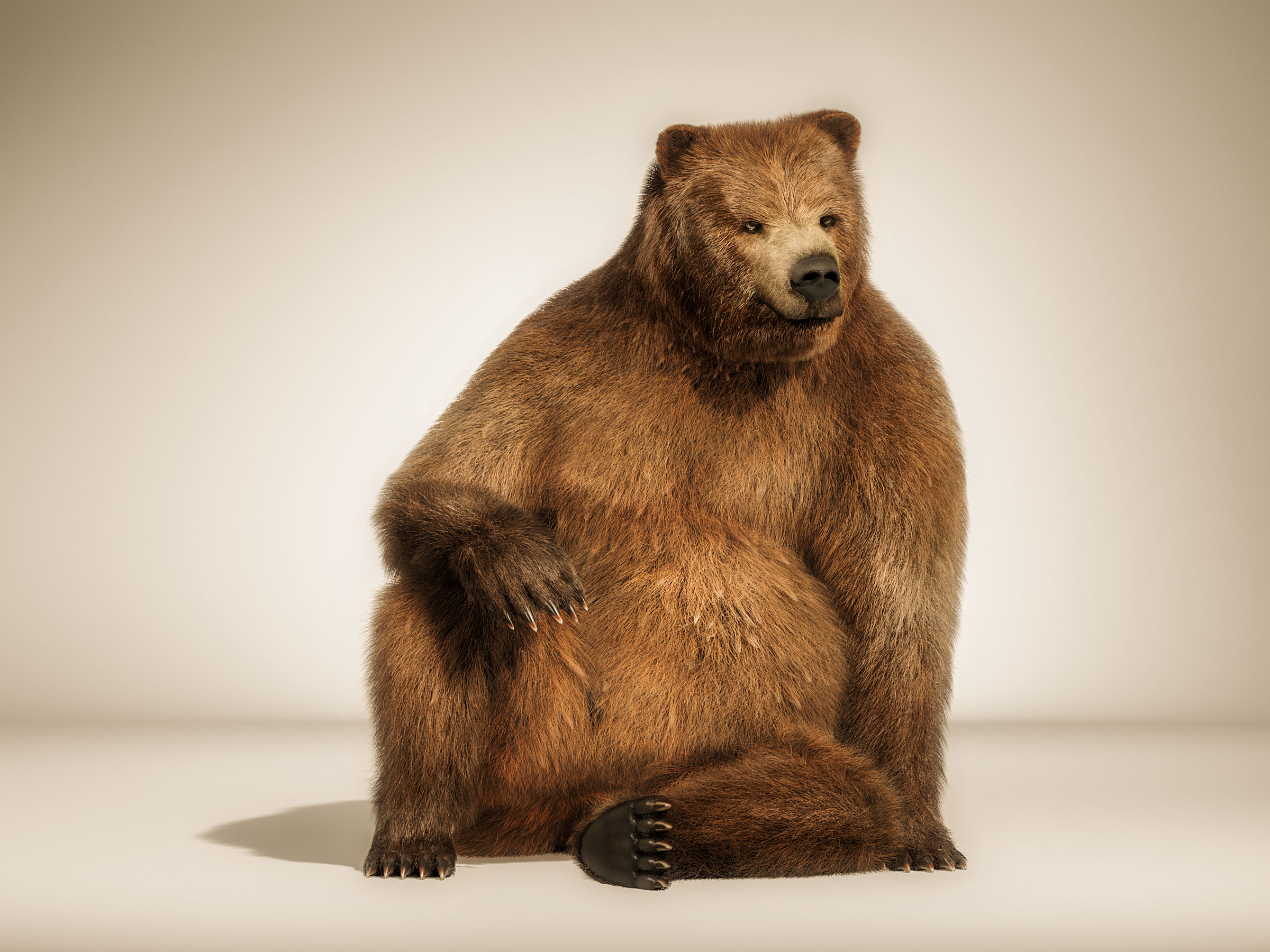 brown_bear_sitting_tank_cgi_london_post_production